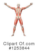Anatomy Clipart #1253844 by Mopic