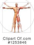 Anatomy Clipart #1253846 by Mopic