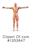 Anatomy Clipart #1253847 by Mopic