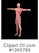 Anatomy Clipart #1300793 by Mopic