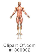 Royalty-Free (RF) Anatomy Clipart Illustration #1300902