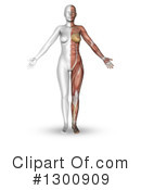 Anatomy Clipart #1300909 by KJ Pargeter