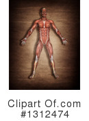 Anatomy Clipart #1312474 by KJ Pargeter