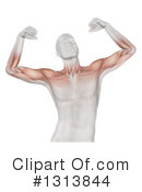 Anatomy Clipart #1313844 by KJ Pargeter