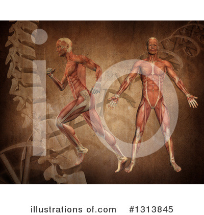 Anatomy Clipart #1313845 by KJ Pargeter