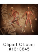 Royalty-Free (RF) Anatomy Clipart Illustration #1313845