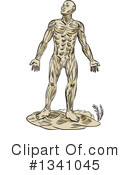 Anatomy Clipart #1341045 by patrimonio