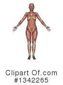 Anatomy Clipart #1342265 by KJ Pargeter