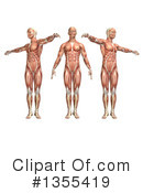 Anatomy Clipart #1355419 by KJ Pargeter