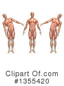 Anatomy Clipart #1355420 by KJ Pargeter
