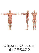 Anatomy Clipart #1355422 by KJ Pargeter