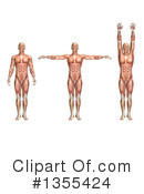 Anatomy Clipart #1355424 by KJ Pargeter