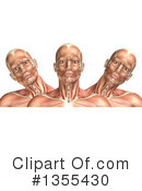 Anatomy Clipart #1355430 by KJ Pargeter