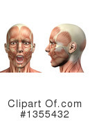 Anatomy Clipart #1355432 by KJ Pargeter