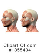 Anatomy Clipart #1355434 by KJ Pargeter
