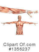 Royalty-Free (RF) Anatomy Clipart Illustration #1356237