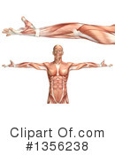 Royalty-Free (RF) Anatomy Clipart Illustration #1356238
