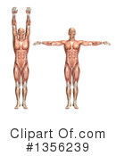 Royalty-Free (RF) Anatomy Clipart Illustration #1356239