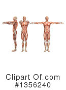 Royalty-Free (RF) Anatomy Clipart Illustration #1356240