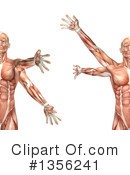 Royalty-Free (RF) Anatomy Clipart Illustration #1356241