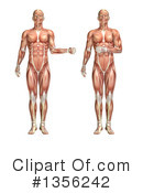 Royalty-Free (RF) Anatomy Clipart Illustration #1356242