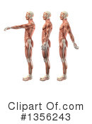 Royalty-Free (RF) Anatomy Clipart Illustration #1356243