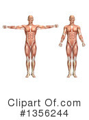Royalty-Free (RF) Anatomy Clipart Illustration #1356244