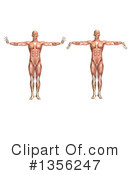 Royalty-Free (RF) Anatomy Clipart Illustration #1356247