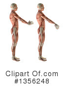 Royalty-Free (RF) Anatomy Clipart Illustration #1356248