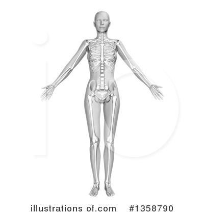 Anatomy Clipart #1358790 by KJ Pargeter