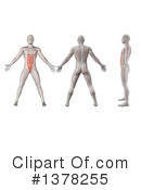 Anatomy Clipart #1378255 by KJ Pargeter