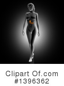 Royalty-Free (RF) Anatomy Clipart Illustration #1396362