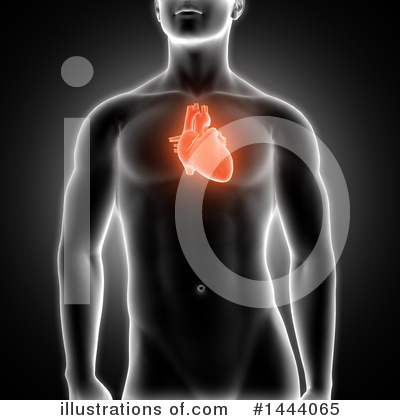 Human Heart Clipart #1444065 by KJ Pargeter