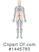 Royalty-Free (RF) Anatomy Clipart Illustration #1445783