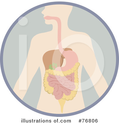 Digestive System Clipart #76806 by Rosie Piter