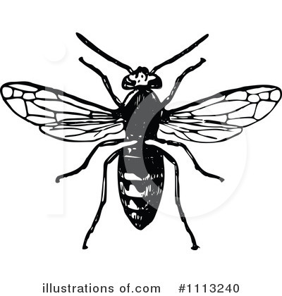 Wasp Clipart #1113240 by Prawny Vintage