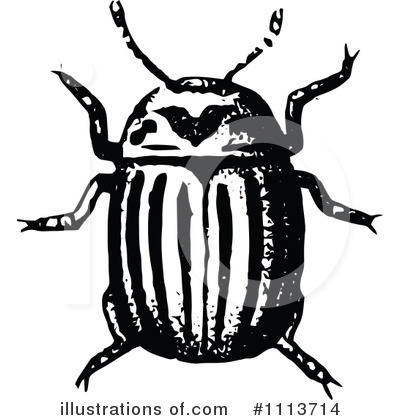 Beetle Clipart #1113714 by Prawny Vintage