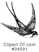 Bird Clipart #34591 by C Charley-Franzwa