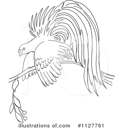 Bird Of Paradise Clipart #1127761 by Picsburg