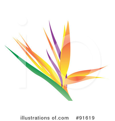 Bird Of Paradise Clipart #91619 by Arena Creative