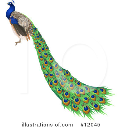 Peacock Clipart #12045 by AtStockIllustration