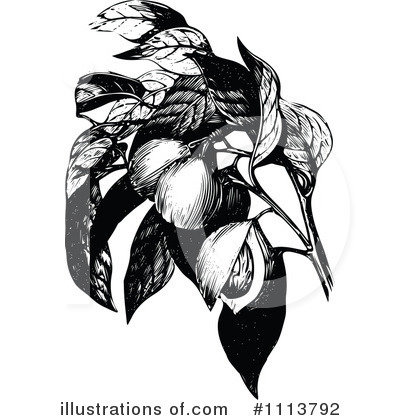 Royalty-Free (RF) Botanical Clipart Illustration by Prawny Vintage - Stock Sample #1113792