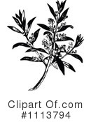 Royalty-Free (RF) Botanical Clipart Illustration #1113794