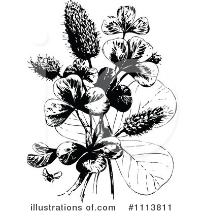 Royalty-Free (RF) Botanical Clipart Illustration by Prawny Vintage - Stock Sample #1113811