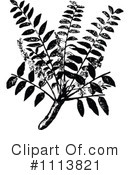 Royalty-Free (RF) Botanical Clipart Illustration #1113821