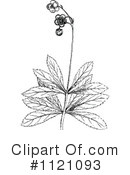 Royalty-Free (RF) Botany Clipart Illustration #1121093