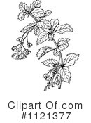 Royalty-Free (RF) Botany Clipart Illustration #1121377