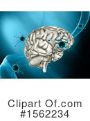 Brain Clipart #1562234 by KJ Pargeter