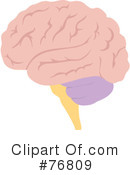 Brain Clipart #76809 by Rosie Piter