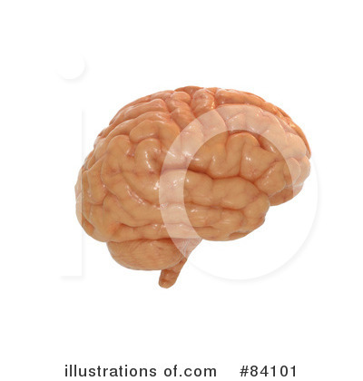 Brain Clipart #84101 by Mopic